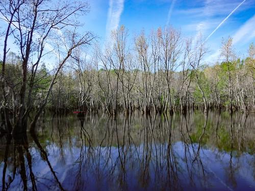 Sparkleberry Swamp-15