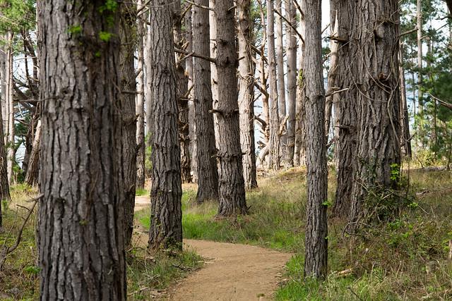 Forest Trail through Point Lobos