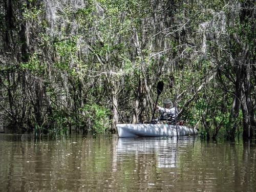 Sparkleberry Swamp-57