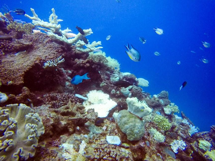 ReefFishEating