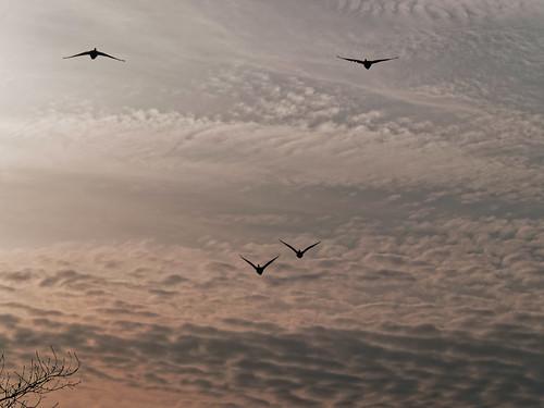 Flyin' geese