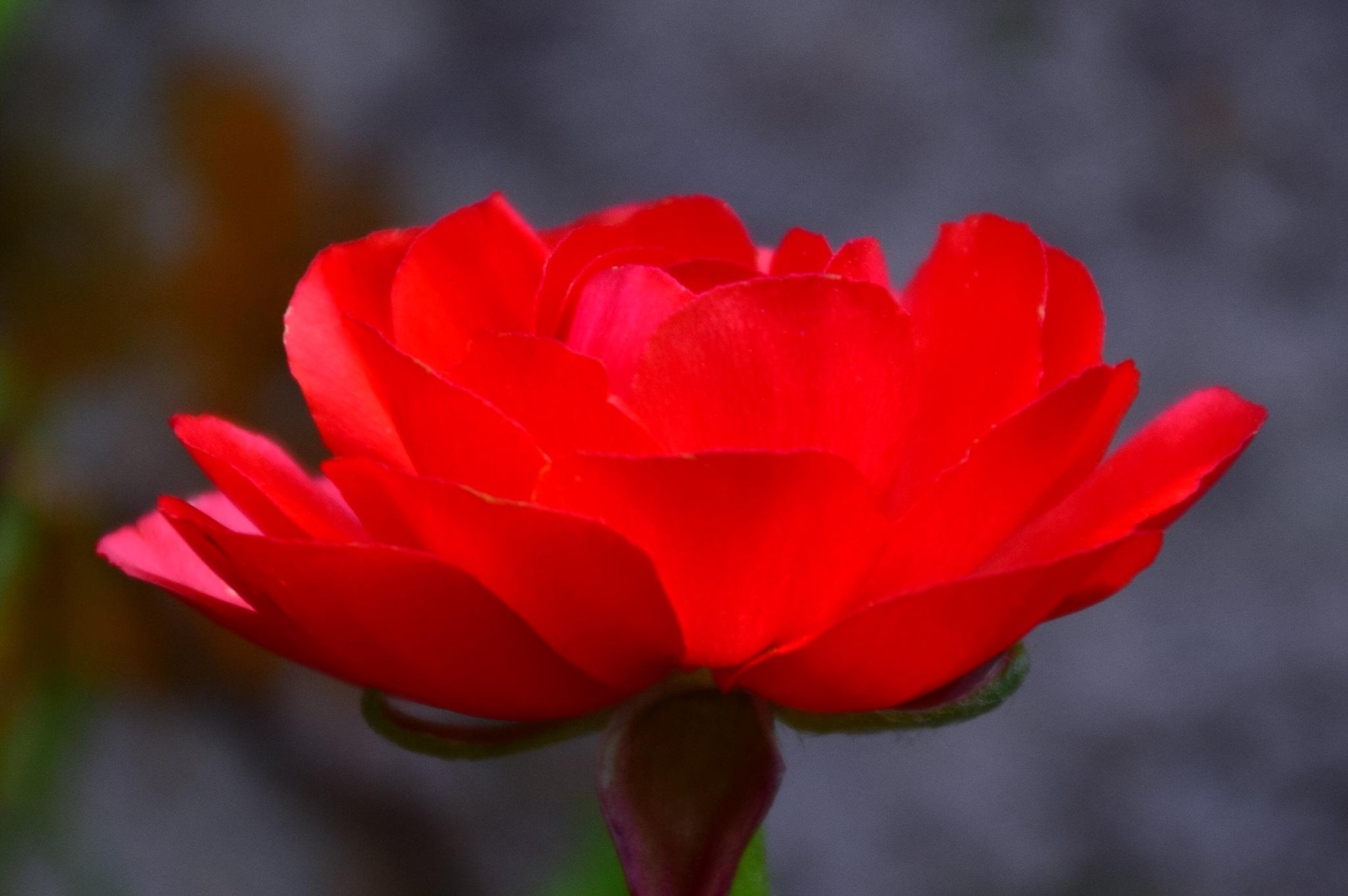 花花世界-陸蓮花 - mp86840127的創作 - 巴哈姆特