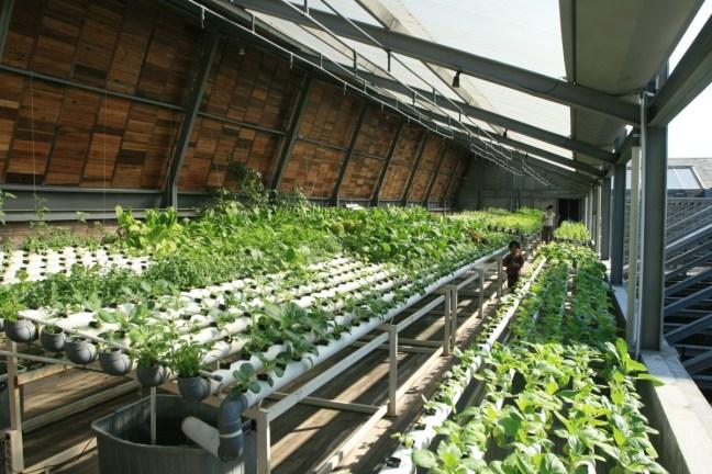 The Roof Top Garden