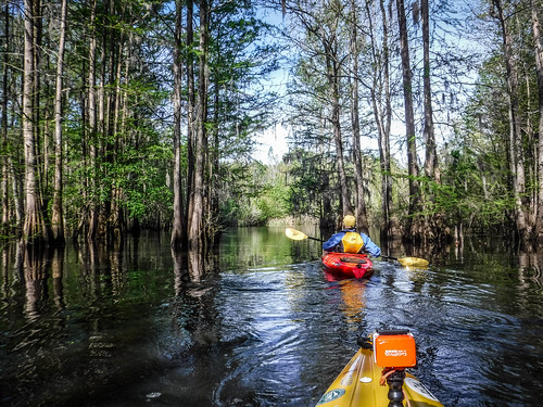 Sparkleberry Swamp-18