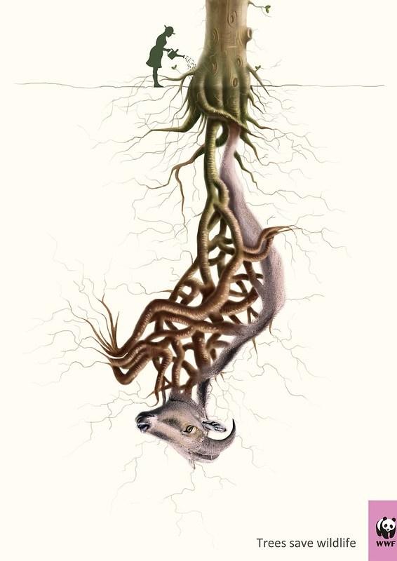 WWF - Trees Saves Wildlife Nilgiri
