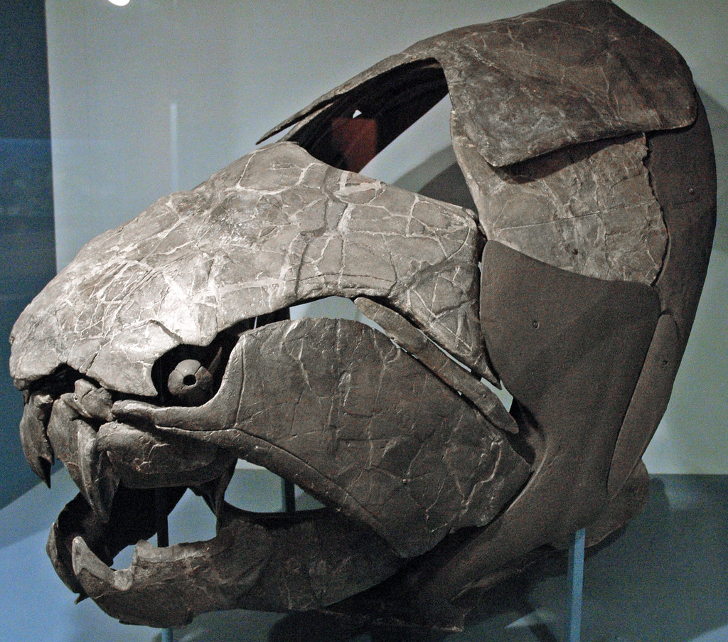 Dunkleosteus terrelli fossil fish Cleveland Shale Membe