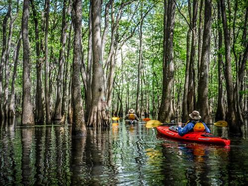 Sparkleberry Swamp-79