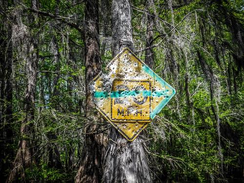 Sparkleberry Swamp-86