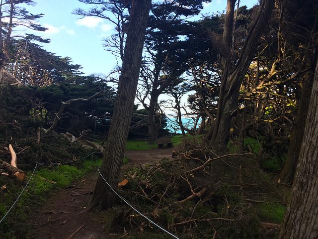 Meandering Trail In Point Lobos