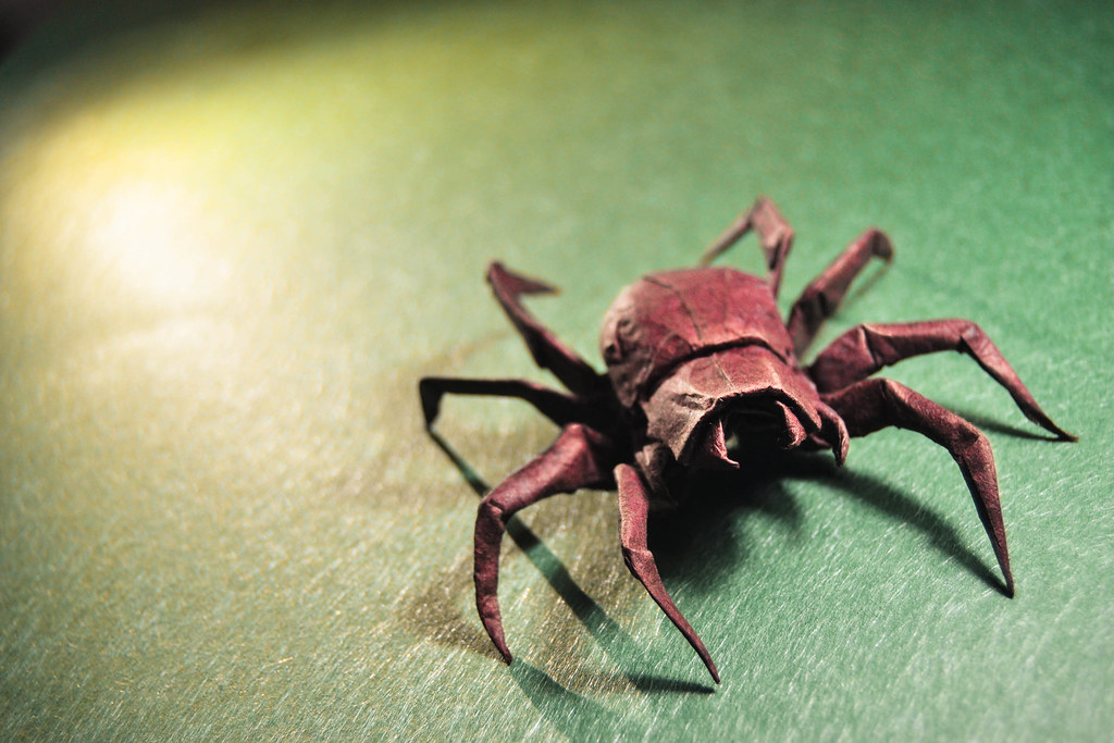 Origami Wolf Spider  Brian Chan  I like so much the