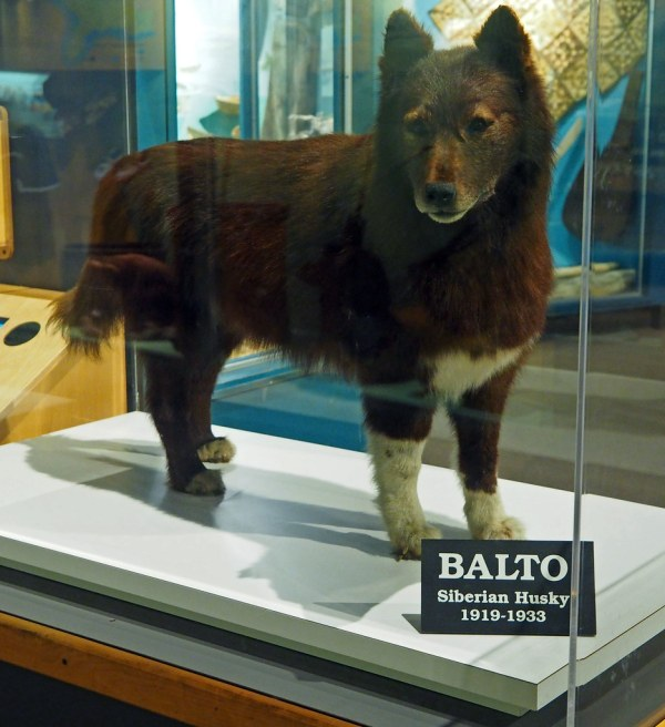Cleveland Museum Of Natural History 02-02-2014 -balto 1