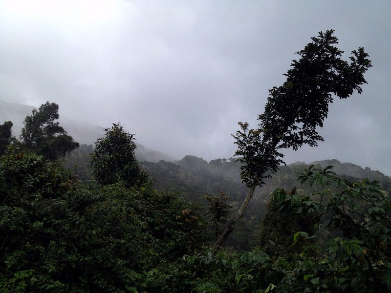 jungle on mount kerincin in sumatra