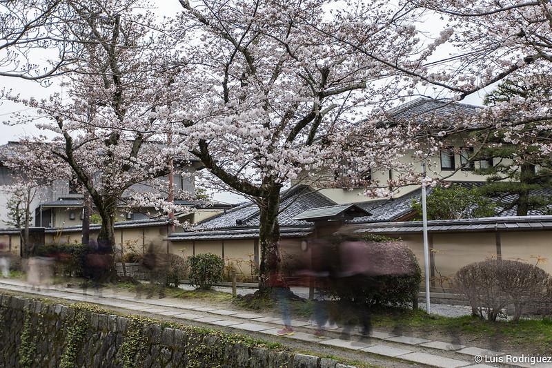 Paseo-Filosofia-Kioto-65