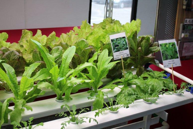智能植物工廠系統