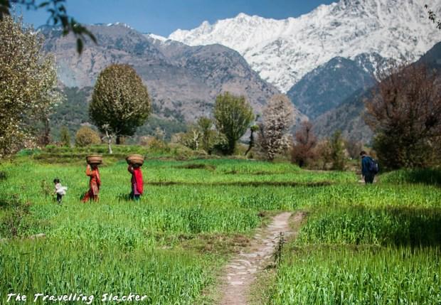 Sidhpur-Zen Valley (42)