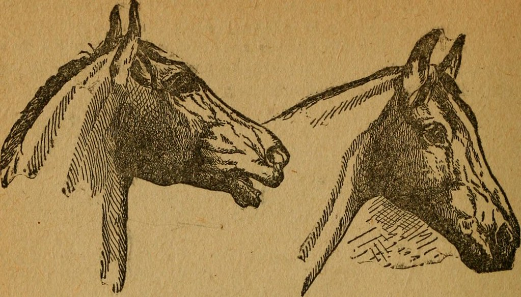 "Image From Page 119 Of ""Gleason's Horse Book The Only Aut Flickr"