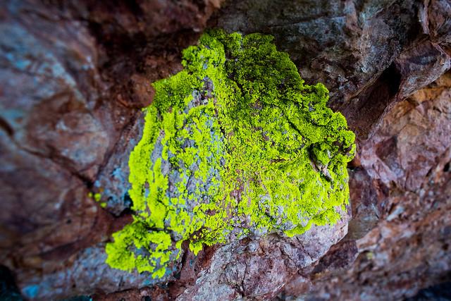 Lichen at Pinnacles National Park