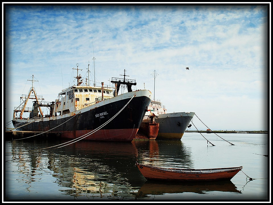 the Port at Aveiro