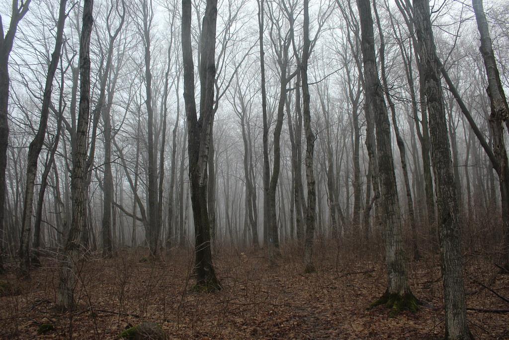 Bayview Escarpment 05