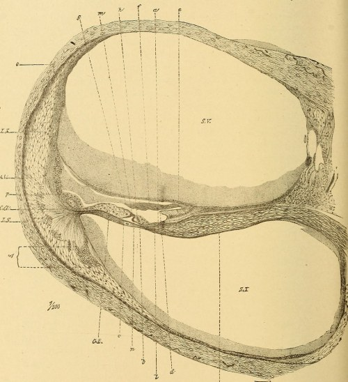 small resolution of  image from page 737 of diseases of the ear a text book for