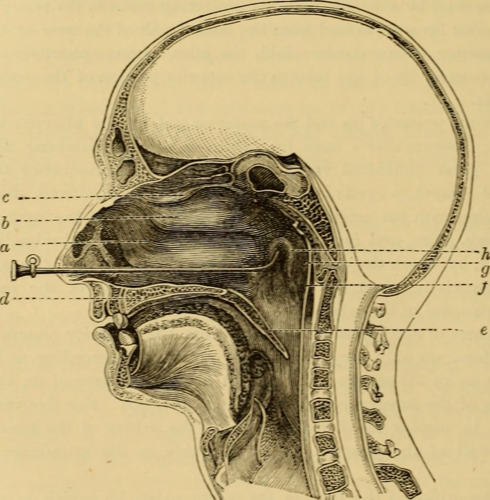 medium resolution of  image from page 107 of a text book of the diseases of the ear