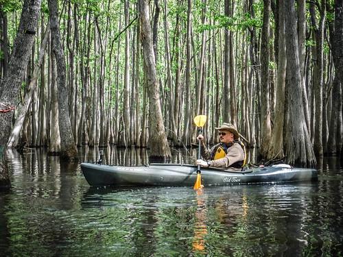 Sparkleberry Swamp-40
