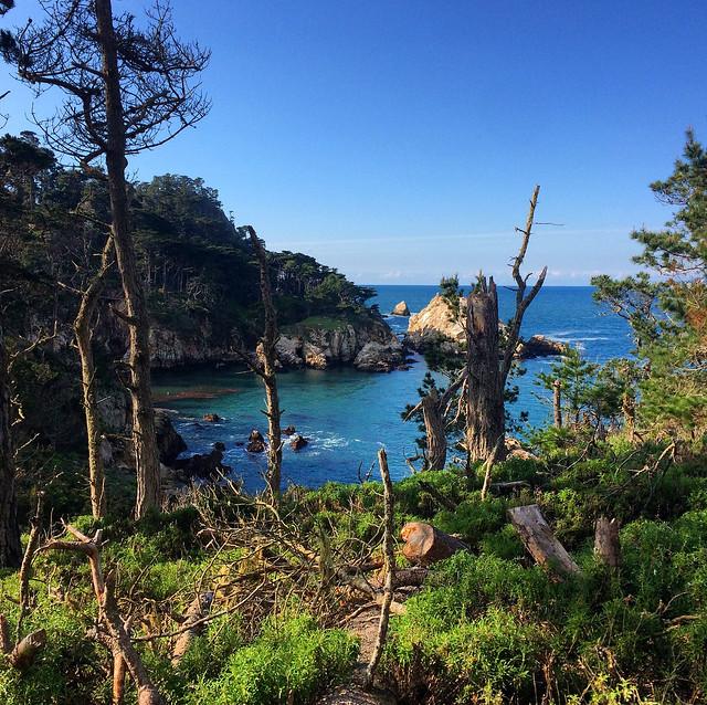 Cypress Cove Point Lobos