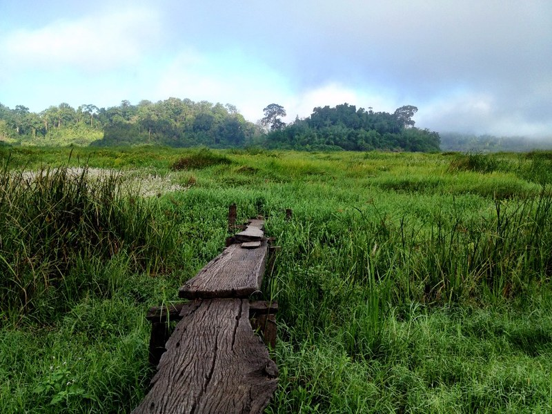 boardwalk through meadows in cat tien national park