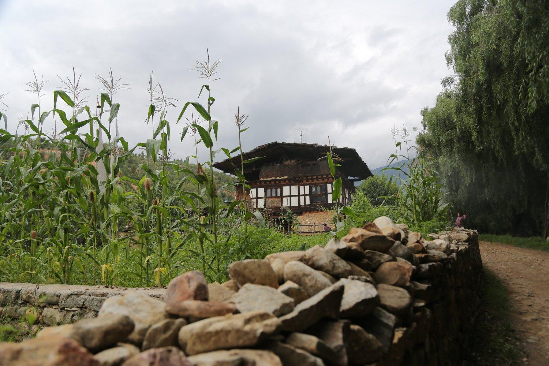 Lungnyi- Paro