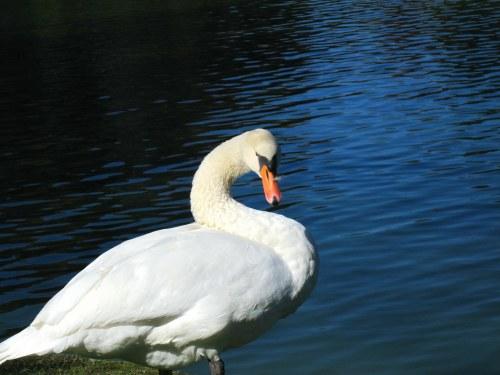 Image result for elon swan