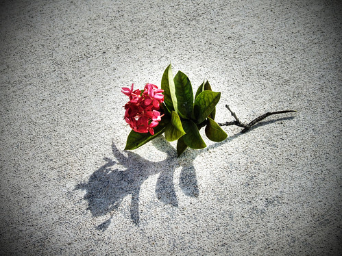 Solitary Flower On A Rough Sidewalk Waiting To Be Picked
