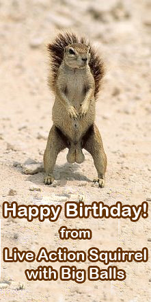 Happy Birthday From Live Action Squirrel With Big Balls