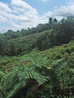 Bilberry Hill