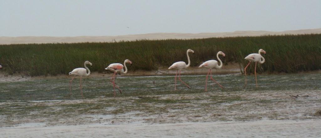Laguna de Naila Parque Natural de Knenifiss Sahara 49