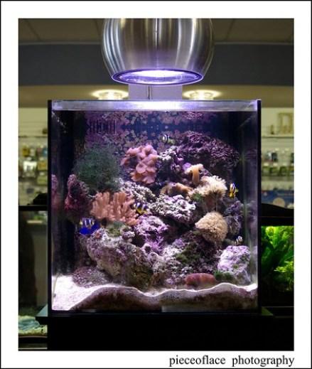 Small coral aquarium...