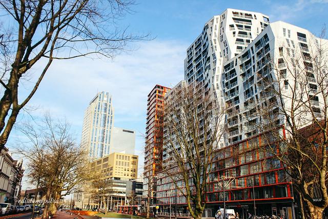 building rotterdam.jpg