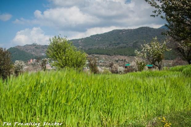 Sidhpur-Zen Valley (10)