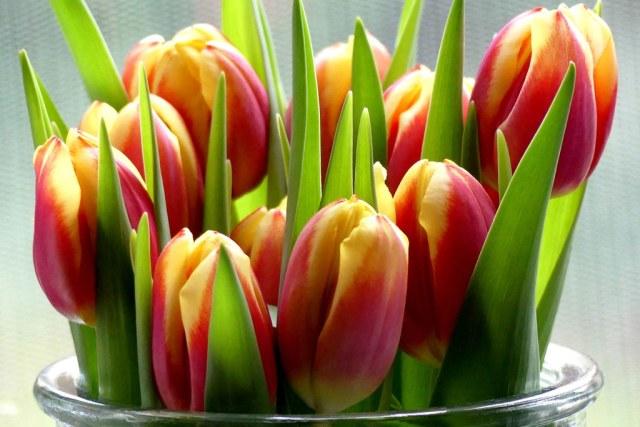 Einen schönen Tag euch allen*** Have a nice day everyone
