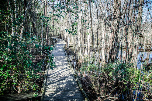 Old Santee Canal Park-5
