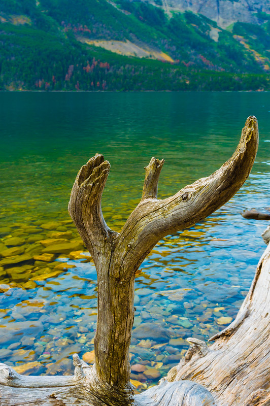 Glacial Lake Drift Wood
