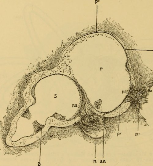 small resolution of  image from page 607 of a text book of the diseases of the ear