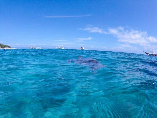 Nadar con tortugas Balicasag