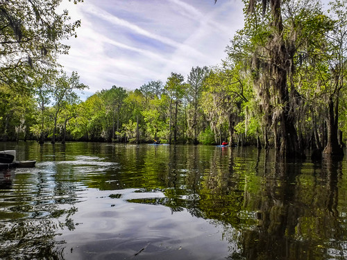 Sparkleberry Swamp-48