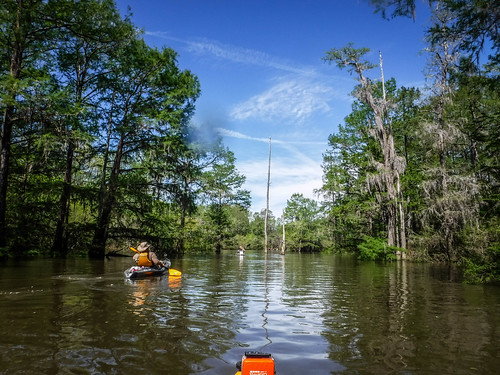 Sparkleberry Swamp-54