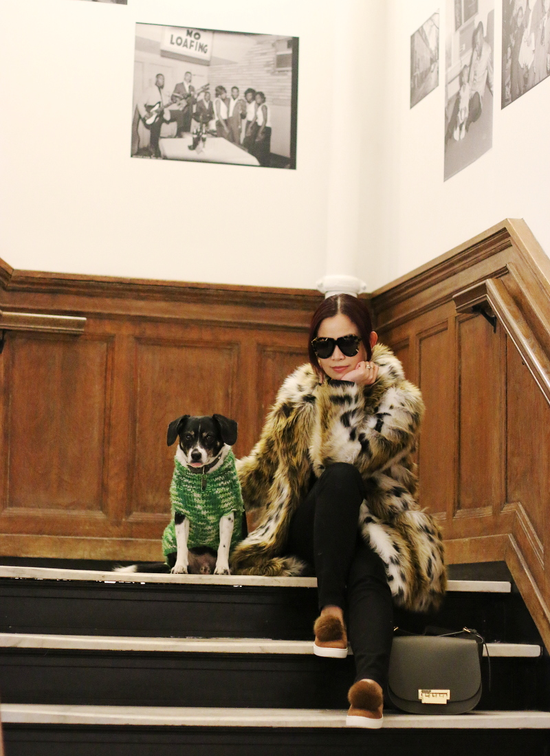beagle-dog-leopard-coat-pom-pom-sneakers-karen-walker-sunglasses-1