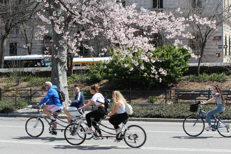 Central Park Cherry Blossom