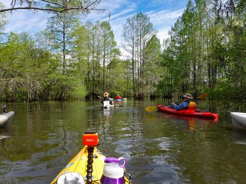 Sparkleberry Swamp-81