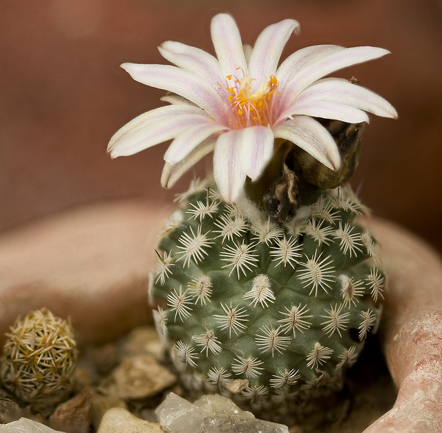 Cute World Map Wallpaper Cute Little Cactus From A Trip To Chihuan Desert