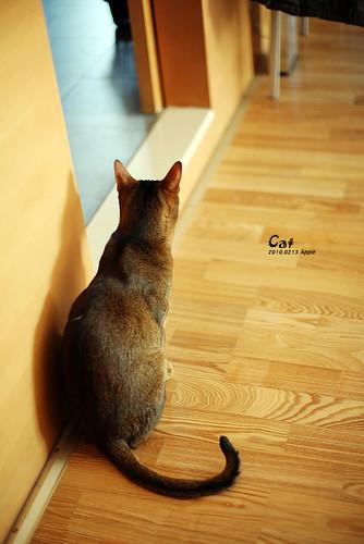 Apple Ping Flickr