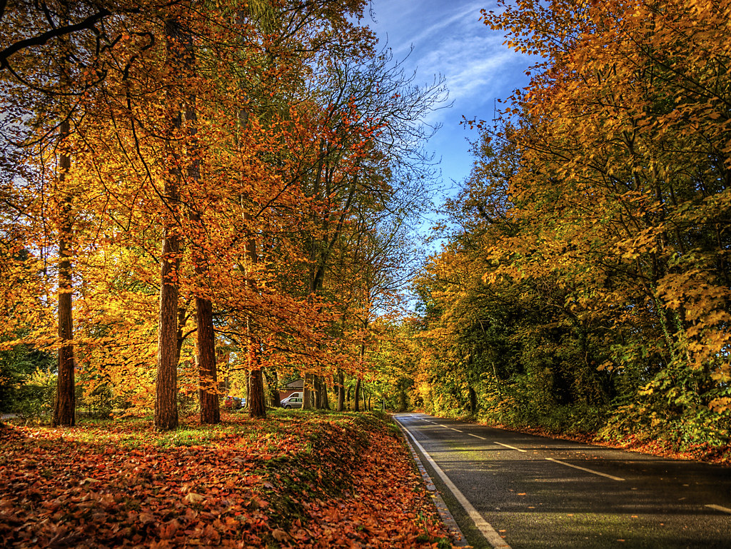 Fall Foliage Wallpaper For Computer Winchester Autumn Colour The Autumn Colour Shows On The